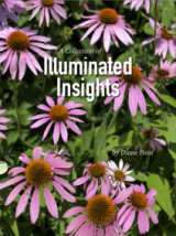 Illuminated Insights