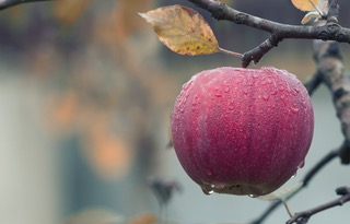 Learn from an Apple